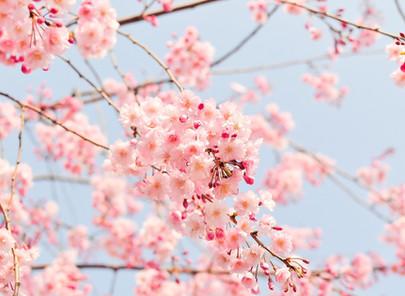 Stopp für Allergien mit der Intensivkur Allergostopp! Jetzt gegen Heuschnupfen und Pollen vorgehen