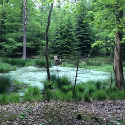 l'étang dans la forêt de Geissenlaeger