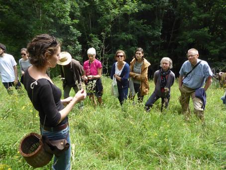 NEWS AVRIL - Découvrez  les plantes sauvages et comestibles pendant les randonnées de Jeûne Nature