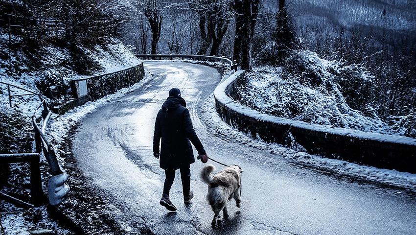 Neve cane