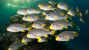 Catorce países se comprometen a proteger los océanos en una rara muestra de solidaridad
