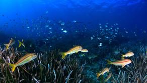 2/ Posidonia Oceánica: IMPACTOS