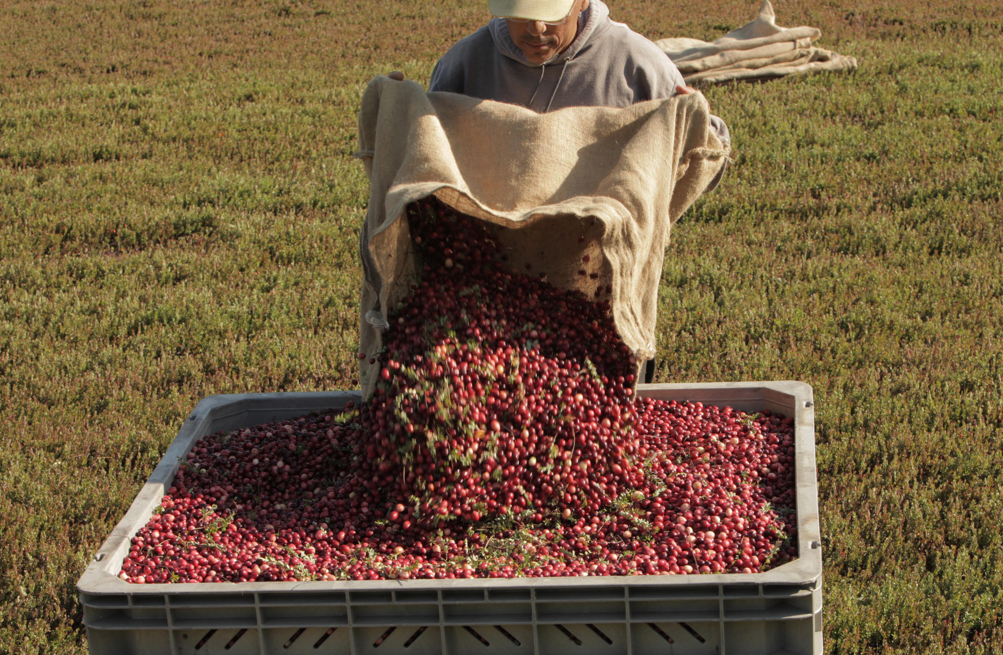 Lots of Berries