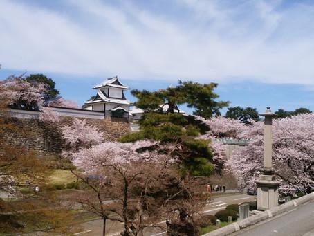 桜満開 ~兼六園~