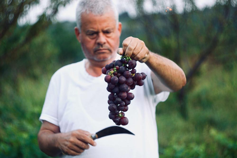 Man holding grape vine, Photo by Mert Guller on Unsplash