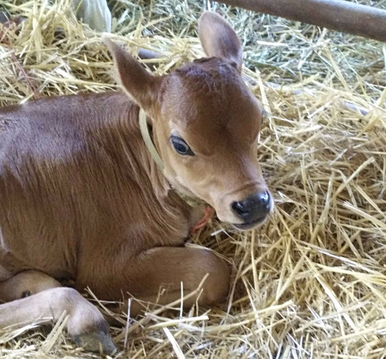 My favorite dairy farm