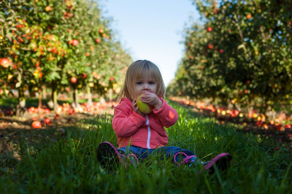Little girl eating apple in an orchard, photo by Patrick Fore on Unsplash