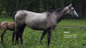 Мара для фотосессий конная база Иткая