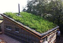 green roof .JPG