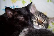 foster home cat.jpg