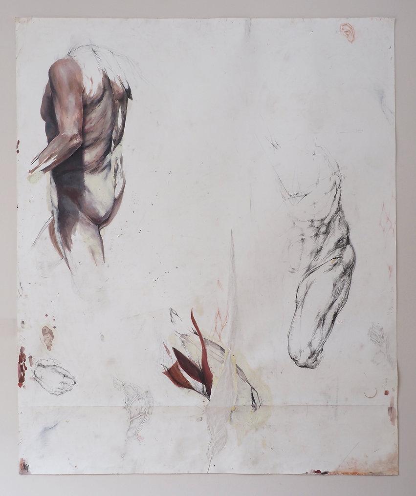 anatomie du dessin lea falguere corps