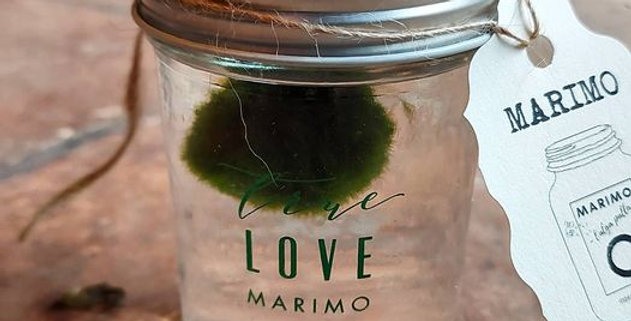 Marimo True Love