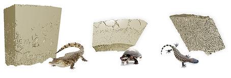 3d models shells.jpg