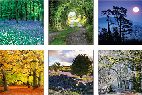 Pack of 6 blank photographic notecards, each one different