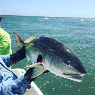 Bull Redfish -  Spring Time Fishing Report for Pawleys Island, Litchfield Beach, Garden City, George