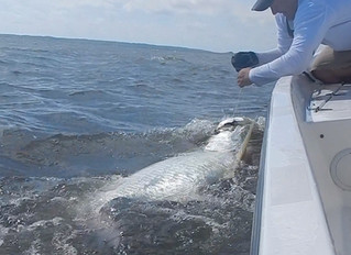 South Carolina Tarpon Fishing Report 2019: From local guides and charters in Myrtle Beach, Pawleys I
