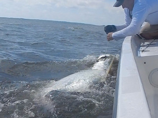 Tarpon Fishing Report: Myrtle Beach, Pawleys Island, Litchfield Beach and Georgetown South Carolina