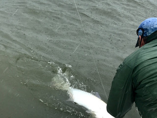 Tarpon Fishing Myrtle Beach South Carolina