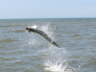 Tarpon Guide and Charter Fishing Report Pawleys Island, Georgetown, Myrtle Beach South Carolina