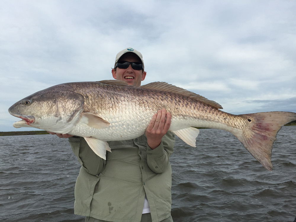 Spring Break is a great time to get on large migratory Bull Redfish. These fish will begin to move inhore to our water in early March. Most of these big reds with be in the 20-40 lb class true trophies. If your interested in some drag screaming action and a great challenge contact Barrier Island Guide Service for your spring break bull red fix.