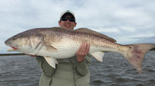 "Bull Redfish ""Spring Break"" Georgetown, Murrells Inlet , Litchfield Beach and Pawleys Isla"