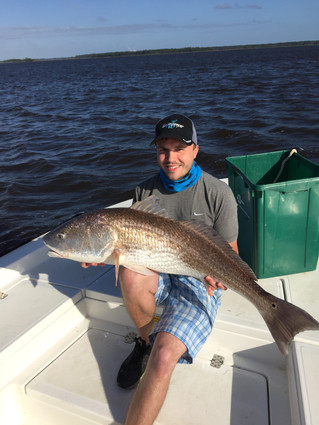 Bull Redfish / False Albacore Report for Myrtle Beach, Debordieu, Murrells Inlet, Pawleys Island, Li