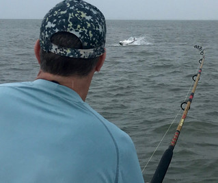 Tarpon Fishing Guide and Charter Report South Carolina
