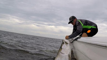 Tarpon Fishing Report: Myrtle Beach, Murrells Inlet, Litchfield Beach, Pawleys Island and Georgetown