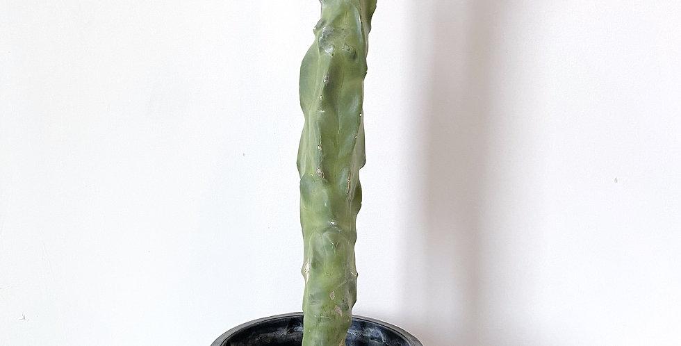 5GAL Totem Pole Cactus