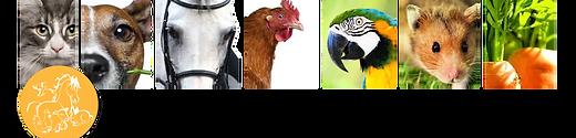 Magasin aliment animaux,nourriture ,chevaux,chien, De Poortere ,Mons