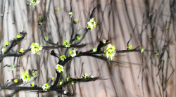appleblossom in fall