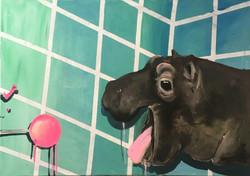 sweet hippo
