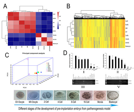 Dynamics of Maternally-expressed Proteins in Parthenogenetic Embryos of Buffalo Unraveled