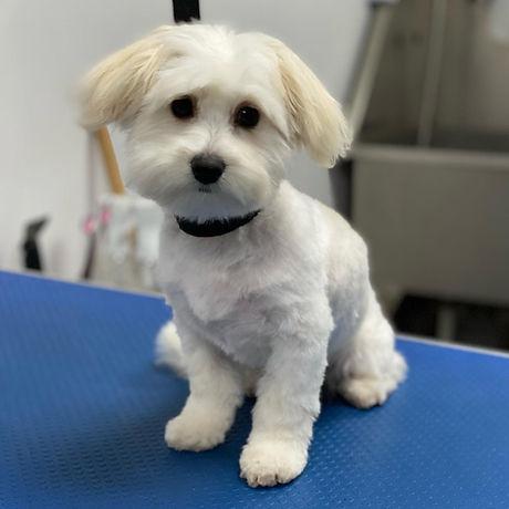 puppy trim.jpg