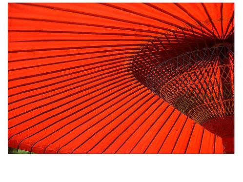 Ed Nara Umbrella