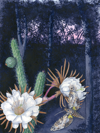 Endangered Everglades Cactus