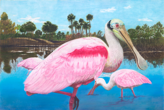 Spoonbills in the Everglades