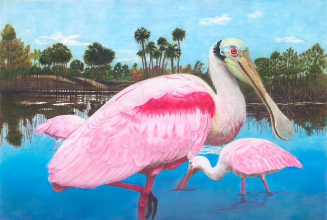 Spoonbills in the Everglades