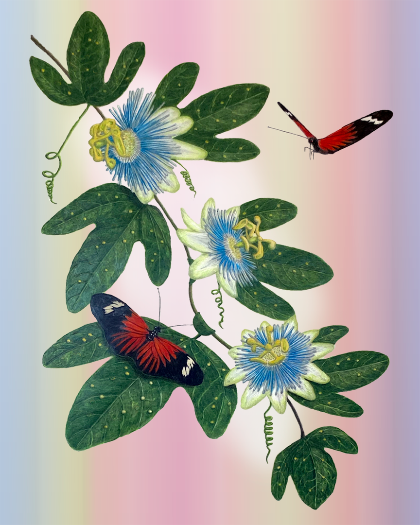 Passionflower and Heleconius Butterflies