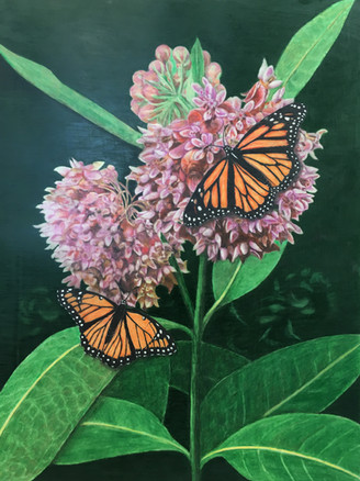 Nature's Mimics: Monarch and Viceroy  Butterflies on Milkweed