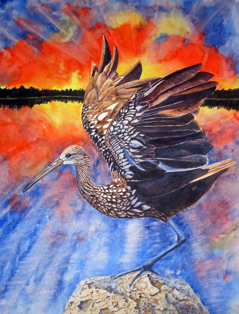 Everglades Sunrise (Limpkin)