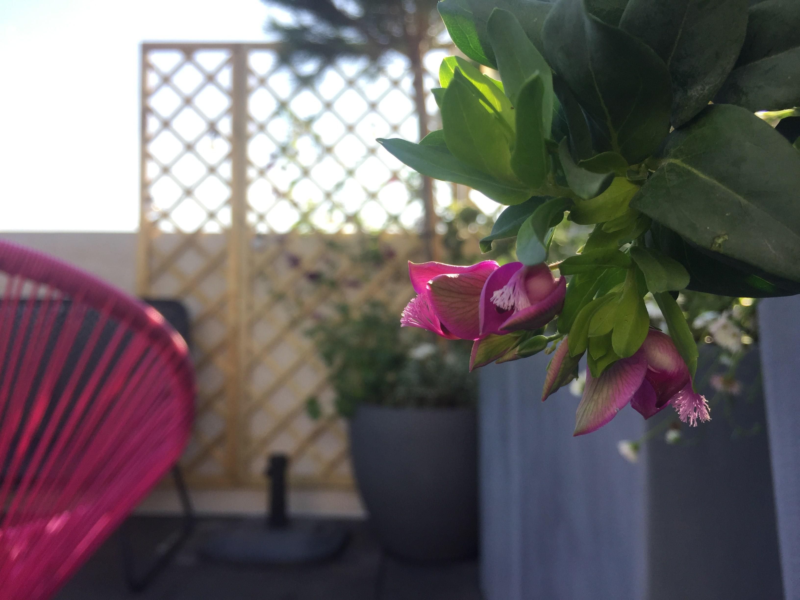 paysagiste terrasse neuilly
