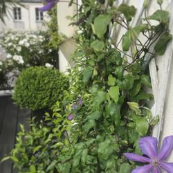 paysagiste terrasse paris
