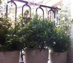 paysagiste-balcon-terrasse-paris