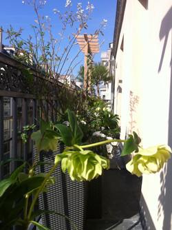 paysagiste balcon terrasse paris