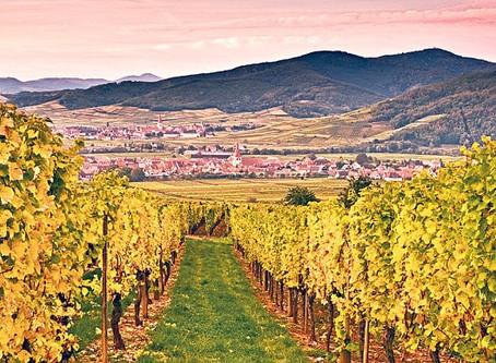 """""""Alsace aften"""" Fredag 16. oktober kl.18.30"""