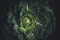 green-leafed-plant-212932.jpg