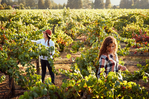 The McBride sisters working the in vineyard.