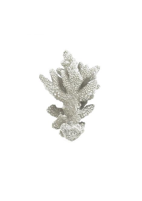 Coral Specimen Print