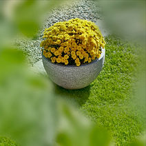 Vaso_crisantemi_modificato.jpg